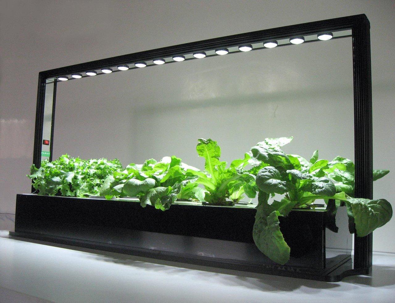 «Расти как на дрожжах»: новое соединение повысит урожайность