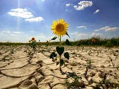 Ученые АлтГУ приняли участие в международном проекте по агроклиматическому исследованию