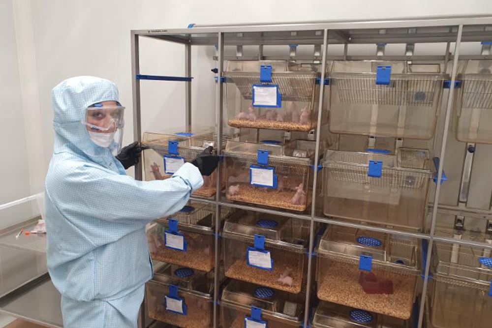 Молодые учёные НИУ «БелГУ» подключились к разработке антикоронавирусных вакцин и препаратов