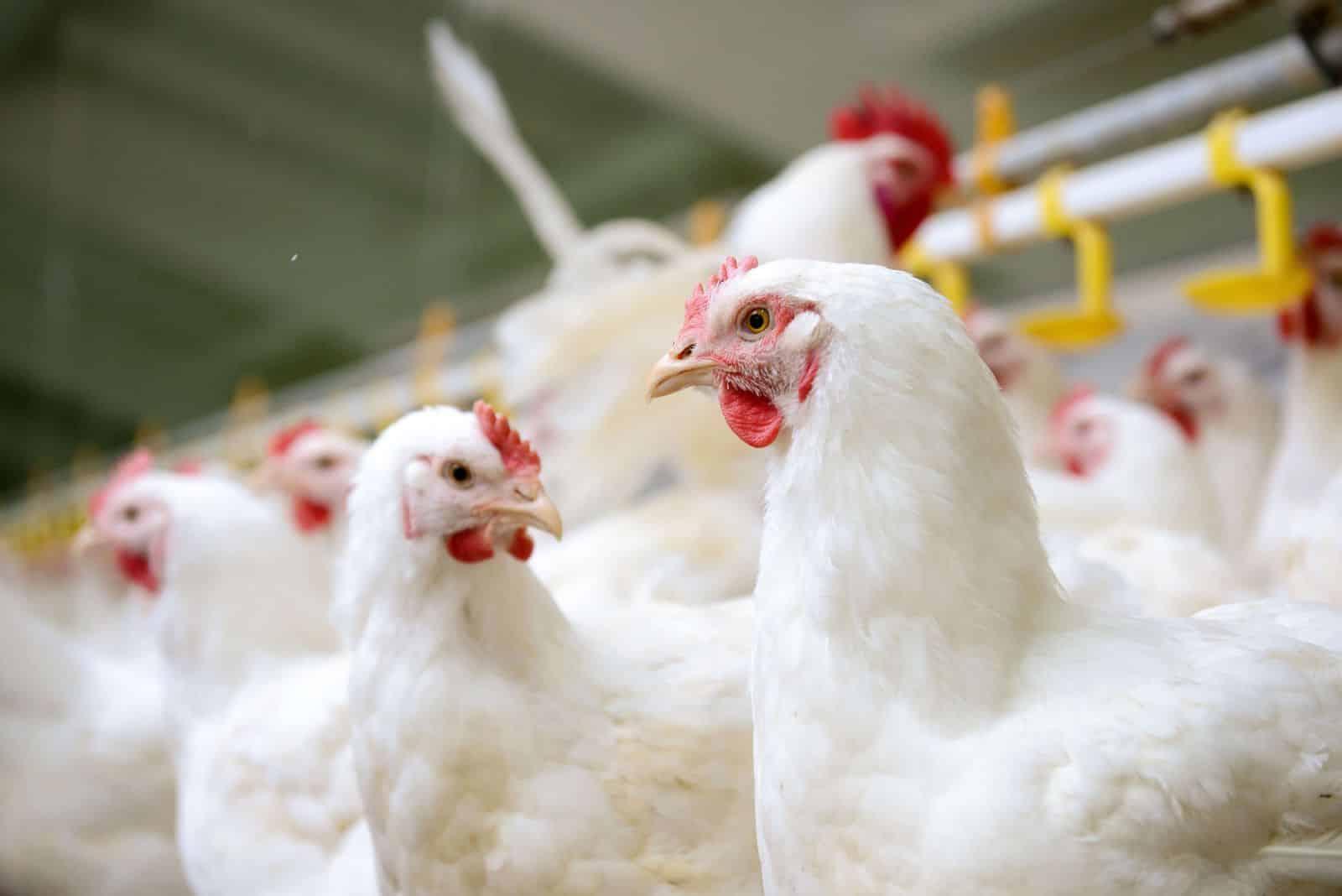 Группа Компаний «Здоровая Ферма» стала участницей клуба «Росс-140»