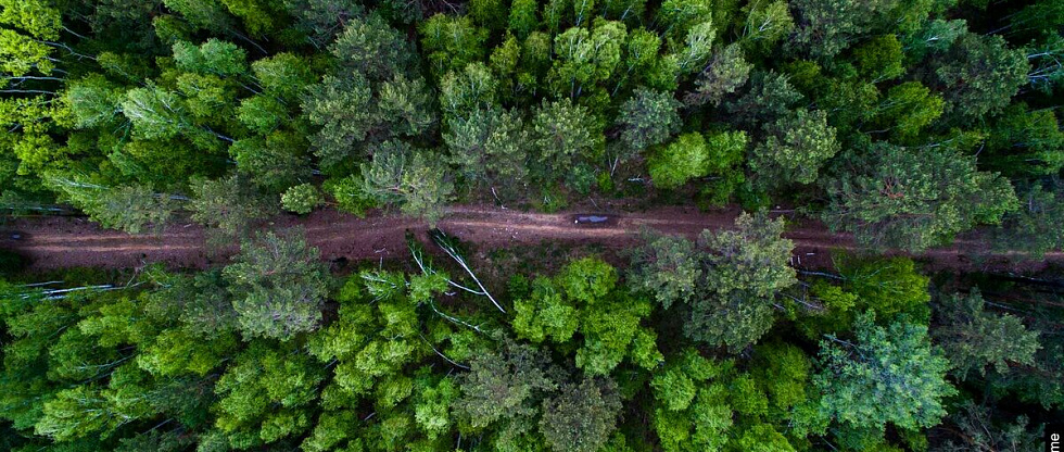 В ТюмГУ открыли Центра биобезопасности лесов