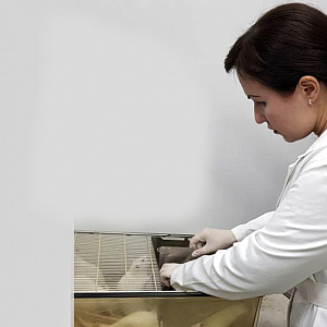 Фармакологи НИУ «БелГУ» разрабатывают новое офтальмологическое средство для поддержания здоровья сетчатки