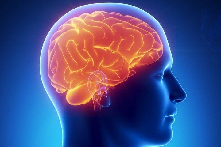 Ученые БФУ в составе международной группы нашли новые регуляторы кровоснабжения мозга