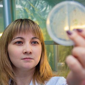 Исследователи БФУ им. И. Канта и Кемеровского госуниверситета разработали инновационный способ повышения антиоксидантной активности свежих овощей