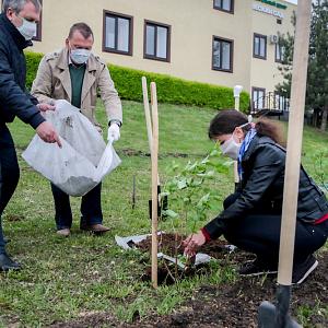 Сирингарий ботанического сада НИУ «БелГУ» пополнился новыми сортами сирени